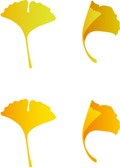 Gingko autumn leaves