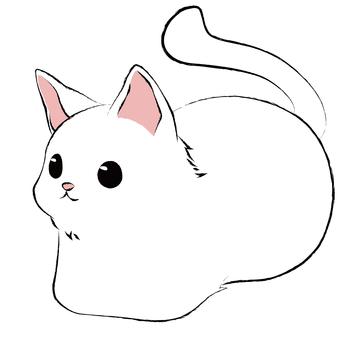 香胸坐貓(白貓)