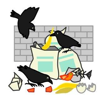 ゴミ捨て場を荒らすカラス
