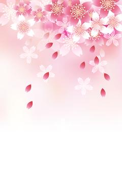 벚꽃의 꽃 58