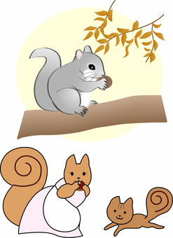 Various illustrations of squirrel