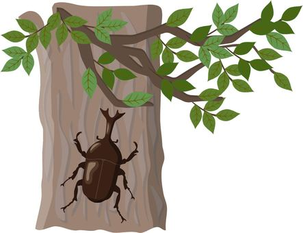 Tree and beetle
