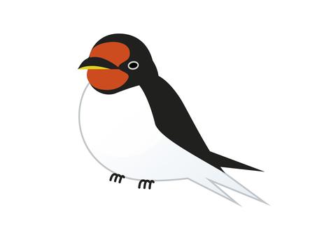 Chubby swallow