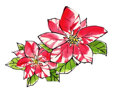 "Poinsettia ""handwritten material"""