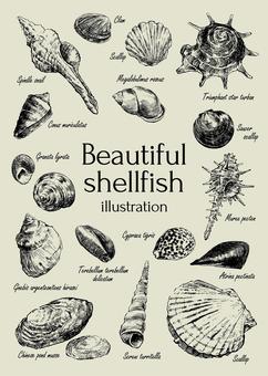 Beautiful shell clipart
