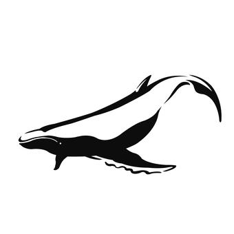 Whale (whale)