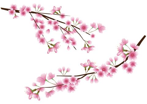 Cherry branch material set