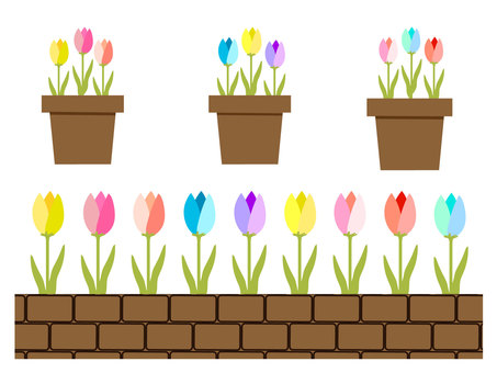 3 color tulip Flowerpot and flower bed