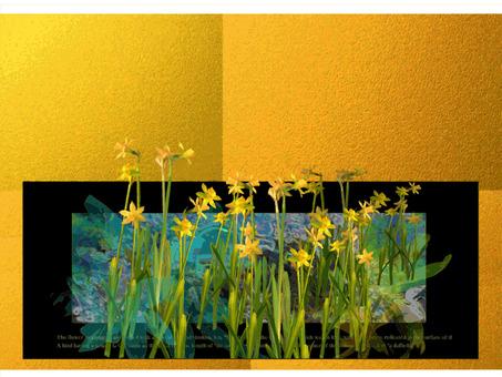 Daffodil contour gland present