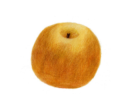 Pear (color pencil drawing)