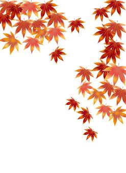 Autumn leaves 335