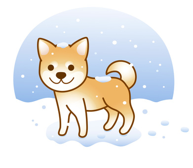 Snow Shiba Inu