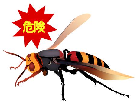 Great hornet