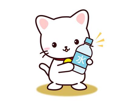 Cat (water)