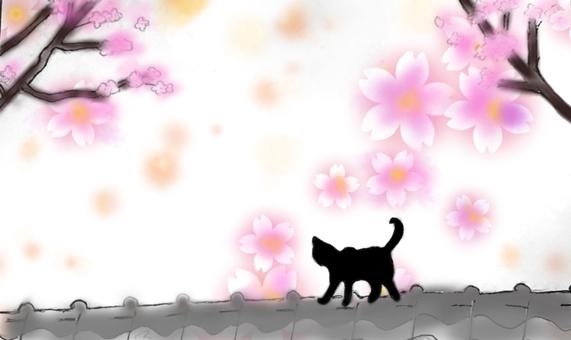 Cat and cherry