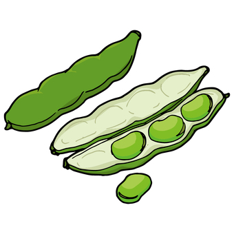 누에콩 / 잠두 / Broad bean