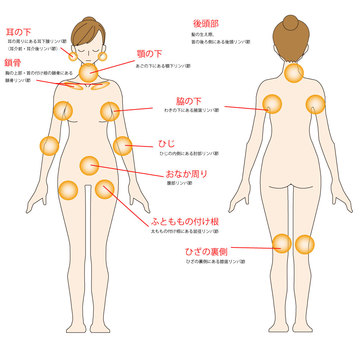 Lymph node position - whole body