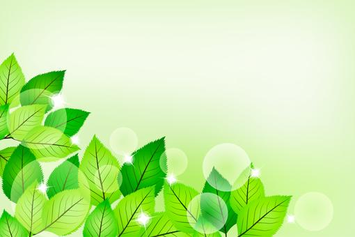 Fresh green sparkling
