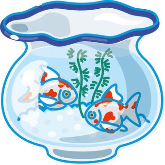 Image of summer goldfish bowl goldfish