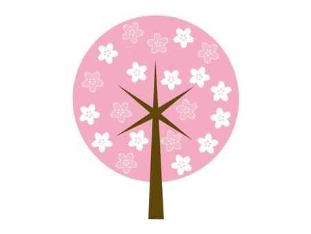 도안 벚꽃 나무 14
