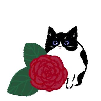 고양이와 장미