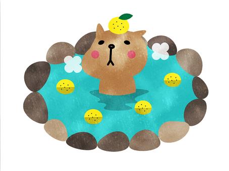 水豚獅子浴冬至冬季動物