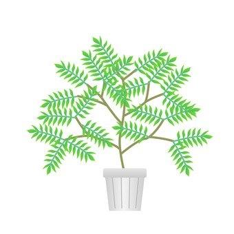 Houseplant - Tonerico