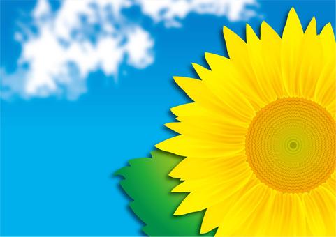 向日葵和青空