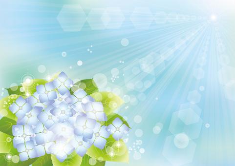 Sun & beautiful hydrangea 3