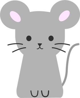 [동물] 쥐