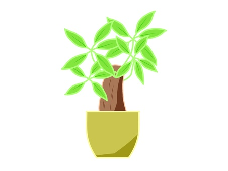 Houseplant pakira
