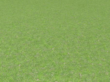 ground (lawn)