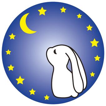 Night sky and rabbit