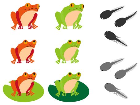 Frogs and gloves