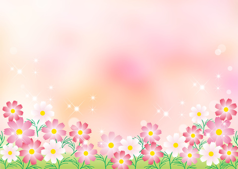 Cosmos _ pale pink background