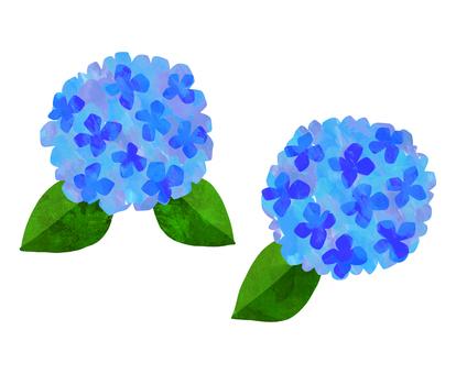 Hydrangea watercolor illustration <blue>