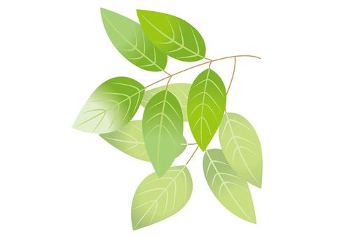 새 잎 4
