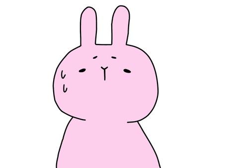 Sweat rabbit 1 of 2