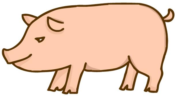 Pig illustration 2