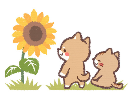 Sunflower and cat