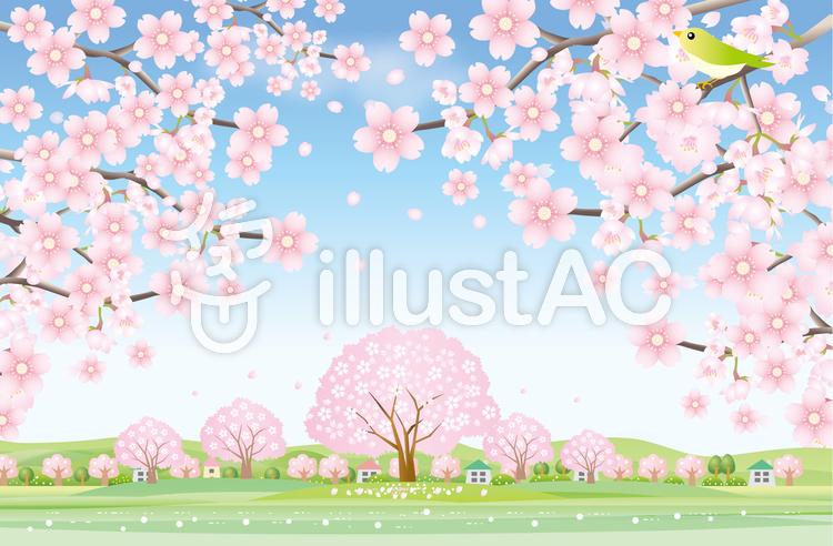 満開の桜の風景2のイラスト