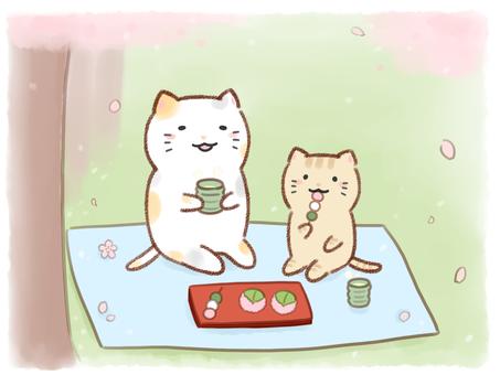 고양이와 꽃놀이