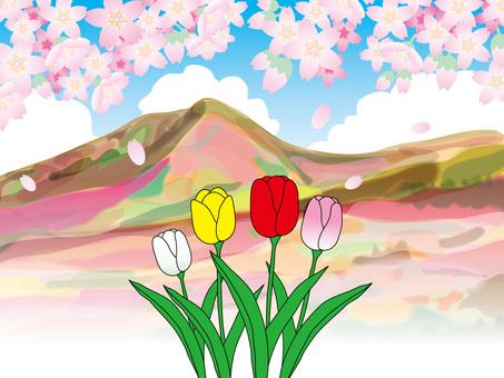 튤립과 봄의 산 (4)