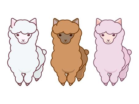 Three types of alpaca