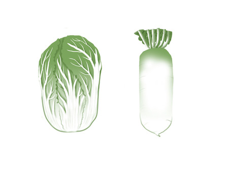 Daikon and Chinese cabbage