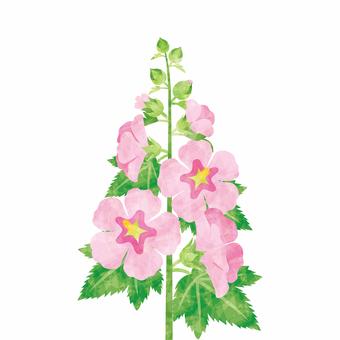 夏の花/タチアオイ