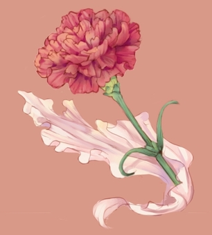 Carnation (with transparent PNG)