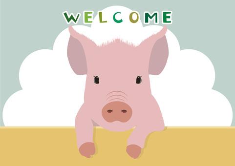 welcome Swine