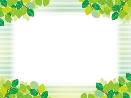 Wide frame (79) summer green stripe
