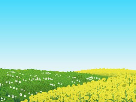 Nanohana and Clover's blue sky Hara Plant Landscape 04